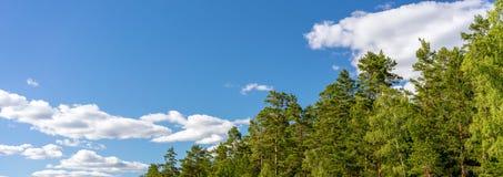 多云天空和森林全景 免版税图库摄影