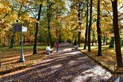 女孩沿在forestï ¼ Œ的一条道路走 免版税库存照片