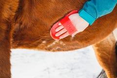 女孩清洗马的腹部与一把刷子在一好日子 免版税库存照片