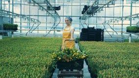 女性卖花人运载在台车的收集的郁金香 股票录像