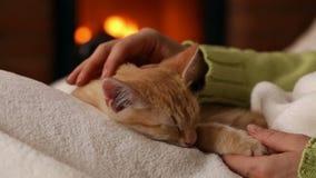 妇女手宠爱睡觉在她的膝部的逗人喜爱的橙色小猫 影视素材