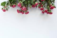 婚姻的桃红色玫瑰blosson白色背景 免版税库存照片