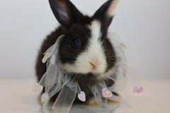 婴孩兔宝宝新出生的兔子贴纸 免版税库存照片