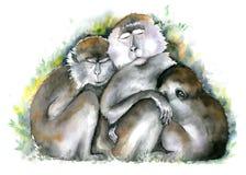 婴孩系列修饰她的短尾猿猴子母亲 坐与闭合的眼睛一起的三棕色monkies 额嘴装饰飞行例证图象其纸部分燕子水彩 库存例证