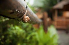 小滴和蜗牛在叶子在雨以后 免版税库存照片