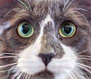 小猫的特写镜头画象 免版税库存照片