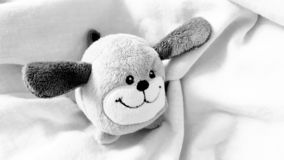 小狗,儿童的软的乐趣玩具 关闭射击 免版税库存照片