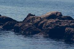岩石在海,克利特希腊 免版税库存图片