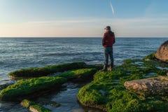 岩石海滨的旅客长满与绿藻类 库存照片