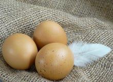 布朗在粗麻布的鸡鸡蛋与羽毛 免版税库存图片