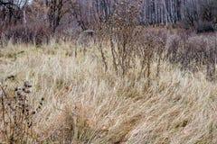 干草在秋天阴云密布天 库存照片