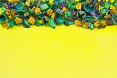 干花,黄色背景 库存照片