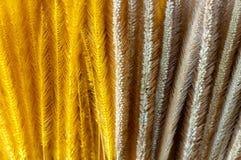 平原和黄色颜色被洗染干燥狼尾草草花 库存图片