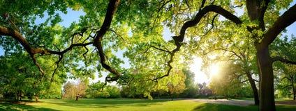 平静的全景风景在一个美丽的公园 免版税库存图片