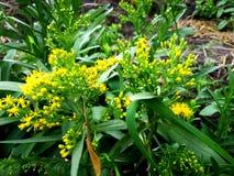 Żółci mali trawa kwiaty fotografia stock