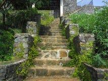Żółci starzy kamienni schodki przerastający z zielonymi roślinami zdjęcia royalty free