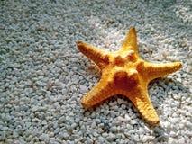 Żółta rozgwiazda na małych bielu marmuru układach scalonych zamyka w górę zdjęcie stock