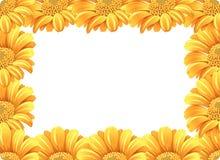 Żółta stokrotka kwiatu granica ilustracji