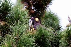 Żółty ogoniasty kakadu obrazy royalty free