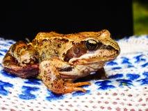 Żaba łapiąca w rękach mężczyzna fotografia royalty free