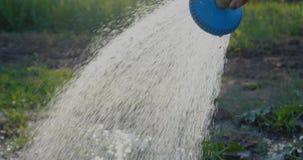 Żeńska ręka utrzymuje prysznic głowę i nalewa zielone rośliny w lecie w mo zdjęcie wideo