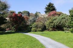 Żwiru ogródu ścieżka prowadzi przez trawy zdjęcia royalty free