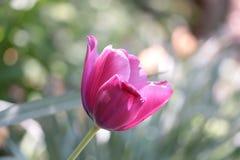 Życie Zaczyna W ogródzie zdjęcie stock