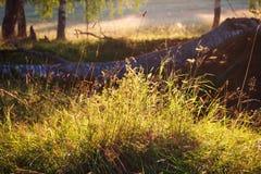 当地草的关闭 在领域的夏天宏观场面与阳光和bokeh 免版税库存照片