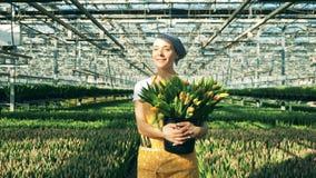 微笑的夫人运载郁金香花束横跨温室的 影视素材