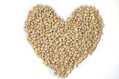 心脏由松果做成在白色背景顶视图,平的位置 库存照片