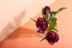 在一个花瓶的郁金香在明亮的背景,从阳光的早晨阴影 贺卡的概念艺术 库存照片