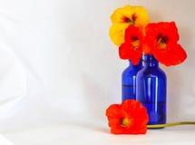 在一个蓝色瓶的金莲花反对一个白色背景 库存照片