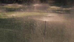 在一个领域在希腊-慢动作的水喷水隆头 影视素材