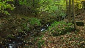 在一条山小河的清楚的水流量在秋天 喀尔巴阡山脉的山顶视图 股票录像
