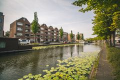 在一条运河的睡莲叶在鹿特丹,荷兰 库存照片
