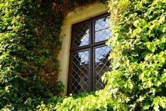 在墙壁上的窗口长满与常春藤 库存图片