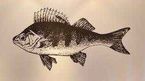 在墙壁上的鱼绘画 库存图片