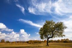在天空蔚蓝和白色云彩下的秋天颜色 库存照片