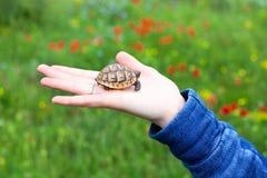 在女性手背景绿色领域的小的乌龟崽与多彩多姿的花特写镜头宏指令 免版税库存照片
