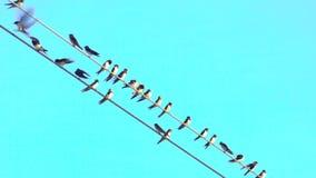 在导线的有些鸟与清楚的天空蔚蓝在背景中,有些到达 某一飞行 好的蓝色淡色天空 股票录像
