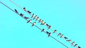 在导线的有些鸟与清楚的天空蔚蓝在背景中 作为小组的逗留 好的淡色天空蔚蓝 股票录像