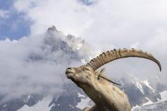 在山背景的高山高地山羊  免版税库存照片