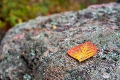 在岩石的死的叶子 免版税库存图片