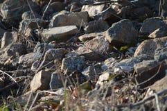 在岩石的细节在日落期间 库存照片