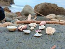 在岩石的贝壳 免版税库存照片