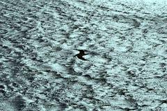 在强风的海鸥航行 免版税图库摄影