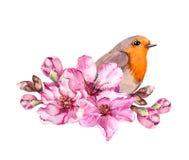 在开花的分支的春天鸟与樱桃,佐仓,苹果,杏仁花桃红色花  水彩 向量例证