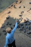 在地面的年轻人饲料鸽子除河以外 免版税库存照片