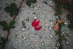 在地面的红色秋天叶子 免版税库存图片