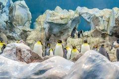 在动物园的大企鹅在西班牙 免版税库存照片